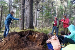 Dr. Elena Ponomarenko shows participants in the MTRI Old Forest Conference (Oct 19-21, 2016)how to read the forest floor to uncover pastdisturbances and forest types
